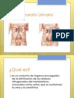 Enfermedades Del Aparato Urinario