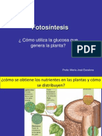 1�M- Fotos�ntesis y nutricion en la planta y respiracion celular.ppt