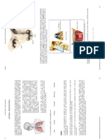 Aula de Anatomia - Sistema Respiratório