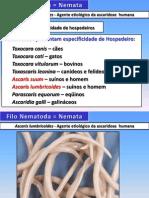 NematodaAscaris.pdf