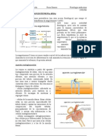 s21b-Sistema Renina Angiotensina