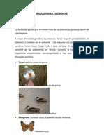 Biodiversidad en Conache