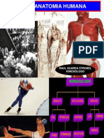 2 Generalidades Anatomia
