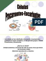 Tipos Celulares Eucariontes Procariontes
