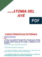 Anatomia Del Ave