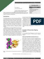 Base flipping.pdf