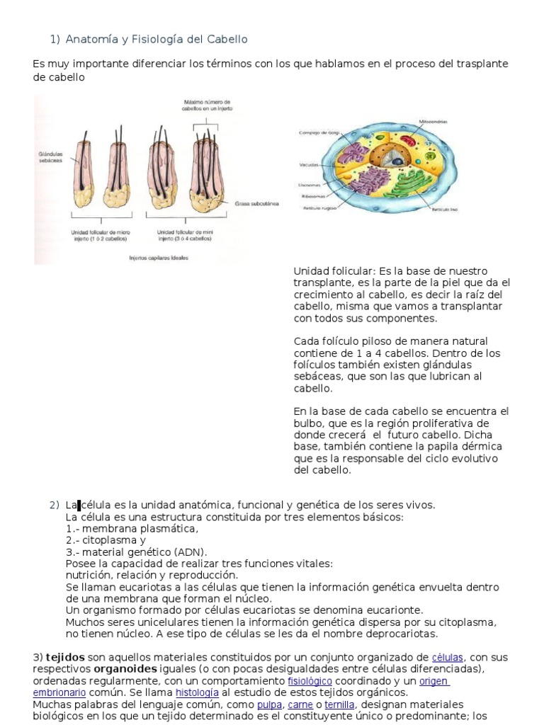 Atractivo Definir La Fisiología Anatomía E Histología Bosquejo ...