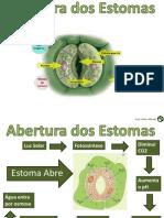 Abertura_Estomas