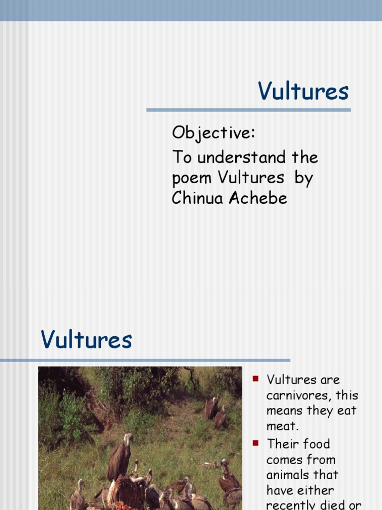 vultures by chinua achebe Chinua achebe is a nigerian writer who would probably be familiar with the sight of vultures vultures are scavenging birds, feeding on the remains of a dead animal.