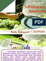 Schistosoma Japonicum
