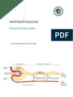 fisiologia orina