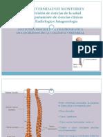 8.3 Anatomía descriptiva y radiológica de la columna.