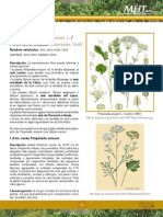Anis Verde Monografia
