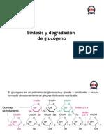 Clase 11 Sintesis y Degradacion de Glucogeno