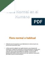 3.- Flora Normal