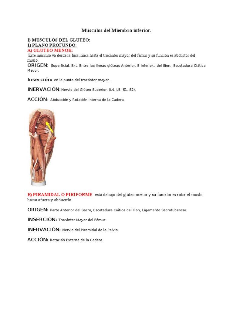 Músculos del Miembro inferior ANATOMIA TRABAJO