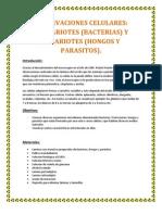 OBSERVACIONES CELULARES.docx