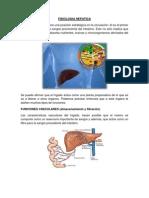 Fisiologia Hepatica y Pancreatica