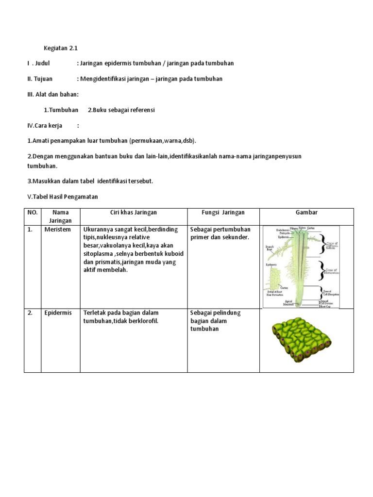 Jaringan tumbuhan ccuart Choice Image