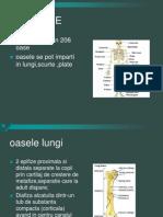 Ortopedie_ANATOMIE.7