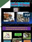 Primeros Auxilios Veterinarios en Bovinos.pptx