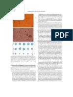 Avaliação Clínica e Laboratorial da Função Renal - 2