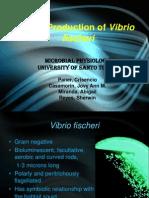 Light Production in Vibrio fischeri