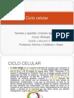 Ciclo Celular _ Cristofer 4 c