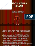 Musc Ulatur A