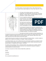 Anatomía vegetal