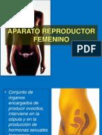 Reproductor Femenino 2010