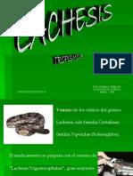 LACHESIS Tropismos Pereyra