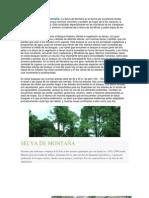 El Bioma Selva de Montaña