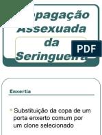 Propagação Assexuada da Seringueira