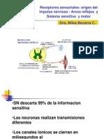 Organo Sensorial - Reflejos -V. Sensitiva y Motora