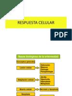 Respuesta Celular 2011