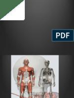 tejido osteoarticular