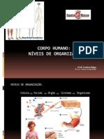 7serie Niveis de Organizacao Do Corpo Humano