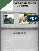 Organos Fosforados ( Jesus Percy Neyra Guerrero)