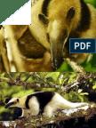 especies amenazadas.pptx