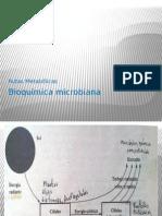 3. Metabolismo microbiano