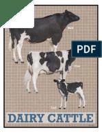 dairy AN