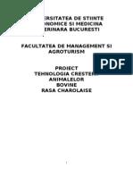 Tehnologia Cresterii Animalelor - Bovine - Rasa Charolaise