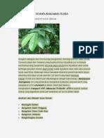 Keanekaragaman Flora