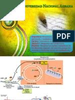 Unidad V. Integración del metabolismo