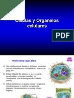 3868056 Celulas y Organelos Celulares