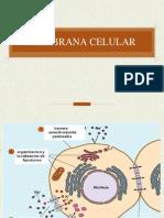 8.  membrana