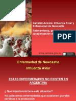 4 Sanidad Avicola