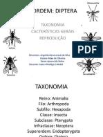 Diptera Pronto