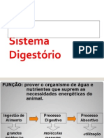 Anatomofisiologia Sistema Digestorio